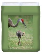 Mama And Juvenile Sandhill Crane Duvet Cover by Carol Groenen