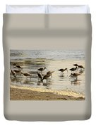Marbled Godwit Birds At Sunset Duvet Cover