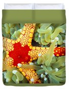 Marine Life, Close-up Duvet Cover