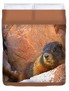 Marmot On The Rocks Duvet Cover