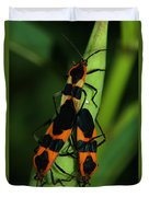 Mating Milkweed Bugs Duvet Cover by April Wietrecki Green