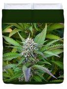 Medicinal Marijuana Growing Duvet Cover