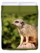 Meerkat 1 Duvet Cover
