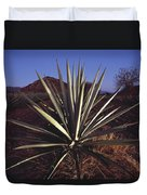 Mexico, Oaxaca, Field Of Agave Plants Duvet Cover