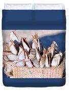 Mollusks On Wood Plank Duvet Cover
