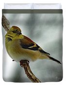Molting In January? - American Goldfinch Duvet Cover