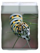 Monarch Caterpillar Clutches Dill In Pincers, Macro Duvet Cover