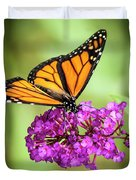 Monarch Moth On Buddleias Duvet Cover