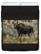 Moose Calf In Fall Colors Duvet Cover