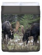 Moose. Males Fighting During The Rut Duvet Cover
