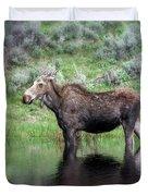 Moose Yellowstone Np_grk6918_05222018 Duvet Cover
