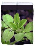 Dewdrops On Leaves Duvet Cover