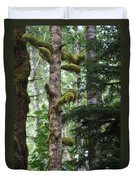 Moss-draped Trees On Tiger Mountain Wt Usa Duvet Cover