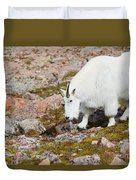 Mountain Goats On Mount Bierstadt In The Arapahoe National Fores Duvet Cover