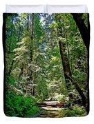 Muir Woods Study 22 Duvet Cover