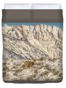 Mule Deer Buck In Winter Sun Duvet Cover