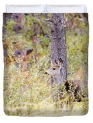 Mule Deer Doe In The Pike National Forest Duvet Cover