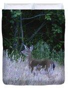 Mule Deer - Sinkyone Wilderness Duvet Cover