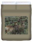 Mule Deer Visitors At Sunset Duvet Cover