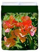 Multi-colored Bougainvillea At Pilgrim Place In Claremont-california  Duvet Cover