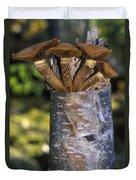 Mushroom Growing From A Birch Tree Duvet Cover