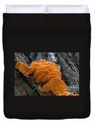 Myakka Fungi Duvet Cover