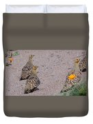 Namaqua Sandgrouse Duvet Cover