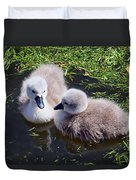 Newly Hatched Cygnets At Abbotsbury Duvet Cover