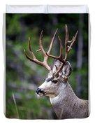 Non-typical Mule Deer Buck Portrait. Duvet Cover