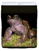 Noras Spiny Chest Frog Duvet Cover