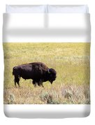 North American Bison- Buffalo In Field  Duvet Cover