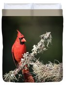 Northern Cardinal In Repose Duvet Cover