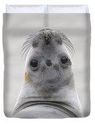 Northern Elephant Seal Looking Back Duvet Cover