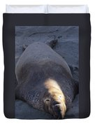 Northern Elephant Seal Duvet Cover