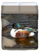 Northern Shoveler Duck Drake Duvet Cover
