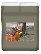 Nyala At The Watering Hole Duvet Cover