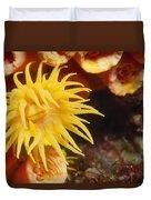 Oange Cup Coral, Tubastraea Coccinea Duvet Cover