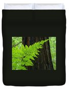 Office Art Ferns Art Redwood Tree Forest Fern Giclee Prints Baslee Troutman Duvet Cover