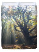 Old Tree And Sunbeams Duvet Cover
