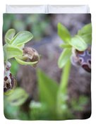 Ophrys Kotschyi Wild Orchid Plant. Duvet Cover