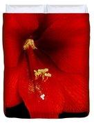Orange Amaryllis Hippeastrum Bloom 12-29-10 Duvet Cover