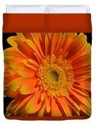 Orange And Yellow Tip Gerbera Daisy Duvet Cover