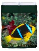 Orange-fin Anemonefish Duvet Cover