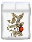 Orange Tree, 1735 Duvet Cover