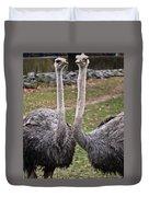 Ostrich Twins 2 Duvet Cover