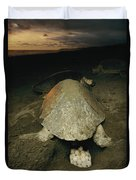 Pacific Or Olive Ridley Turtle Laying Duvet Cover