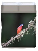 Painted Bunting Curiosity Duvet Cover