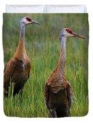 Pair Of Sandhill Cranes Duvet Cover