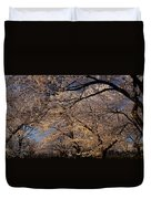Panorama Of Forest Of Sakura Japanese Flowering Cherry Trees Wit Duvet Cover
