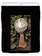 Parasol Mushroom           Macrolepiota Procera           August     Indiana   Duvet Cover